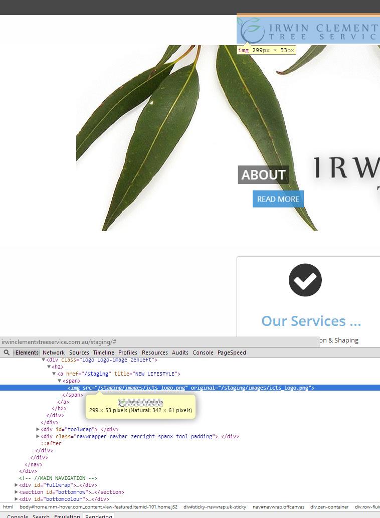 tree-site.jpg