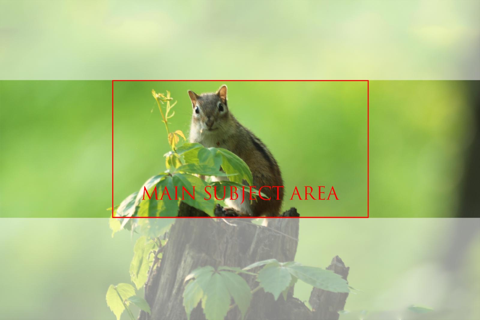 banner-shot-orientation-aspect-ratio3.jpg